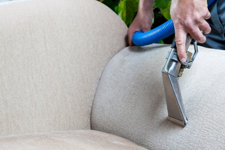 How To Clean Ants Infected Upholstery