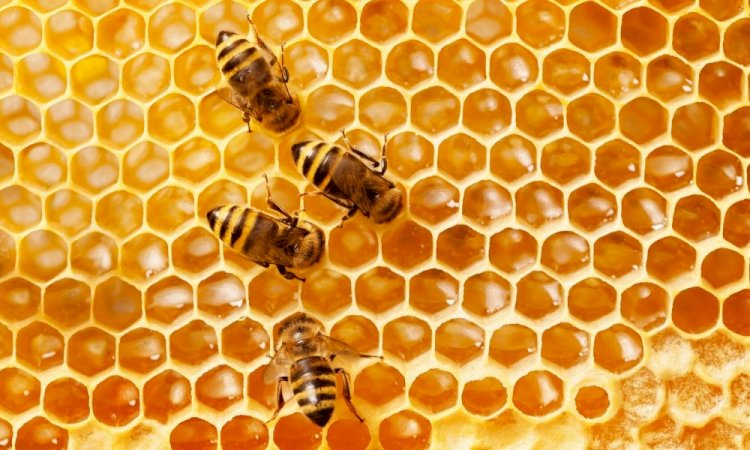 How Long Will A Beehive Last?