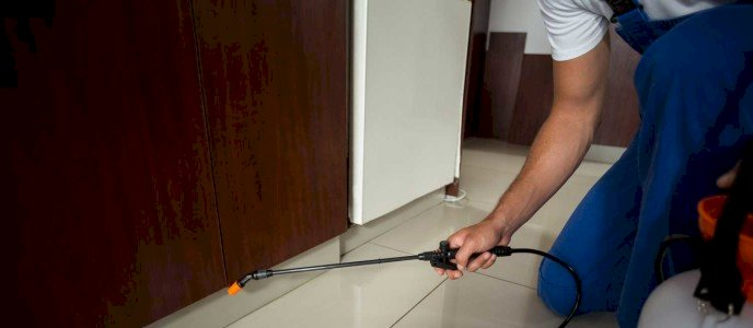 Why Pest Control Is Essential in A Retail Store
