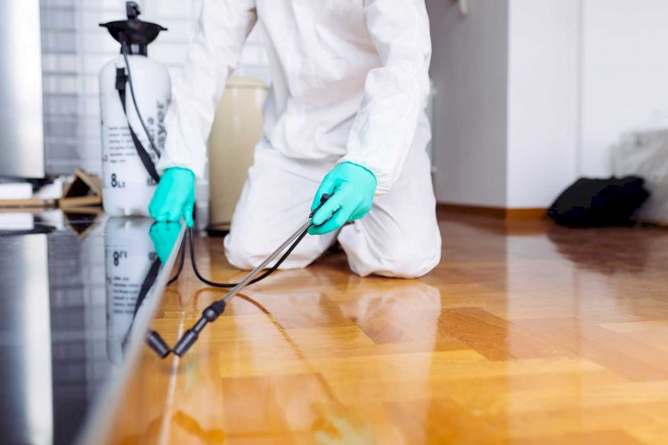Control Pests With Effective Pest Control Services