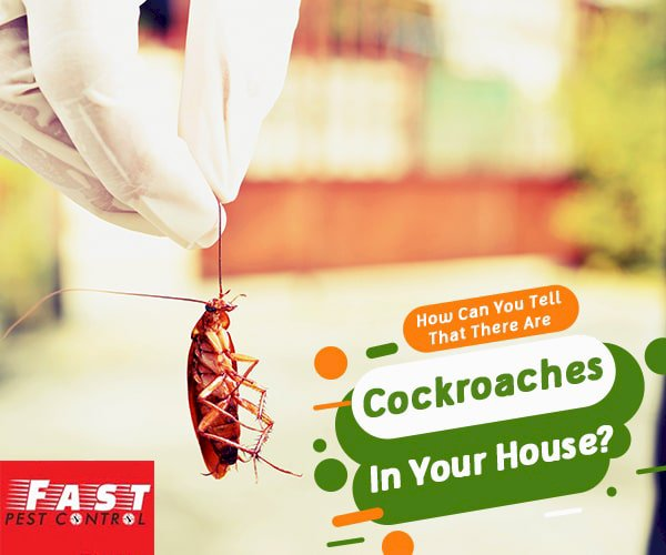 How Can You Exterminate Cockroaches?